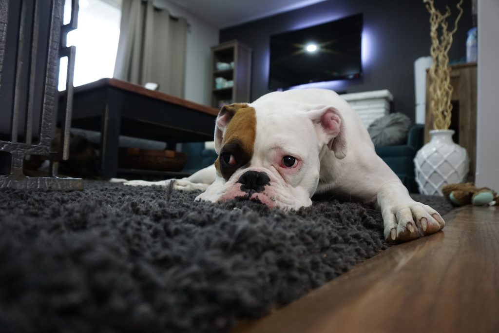 How To Remove Dog Vomit Stain From Carpets