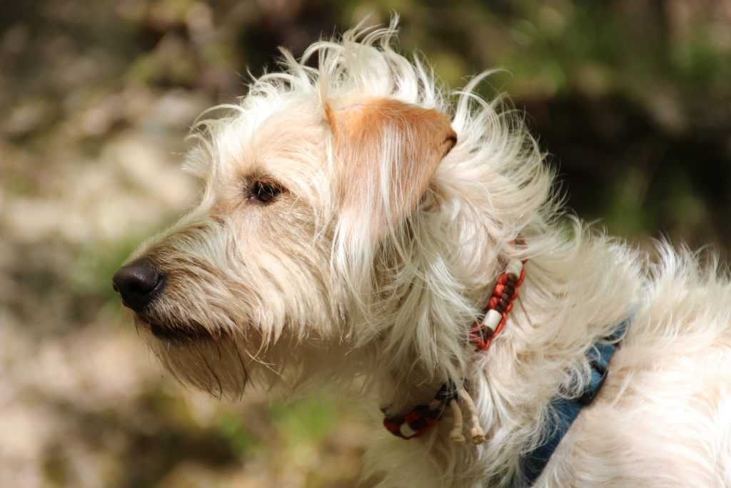 How Many Fleas On A Dog Is Considered An Infestation?