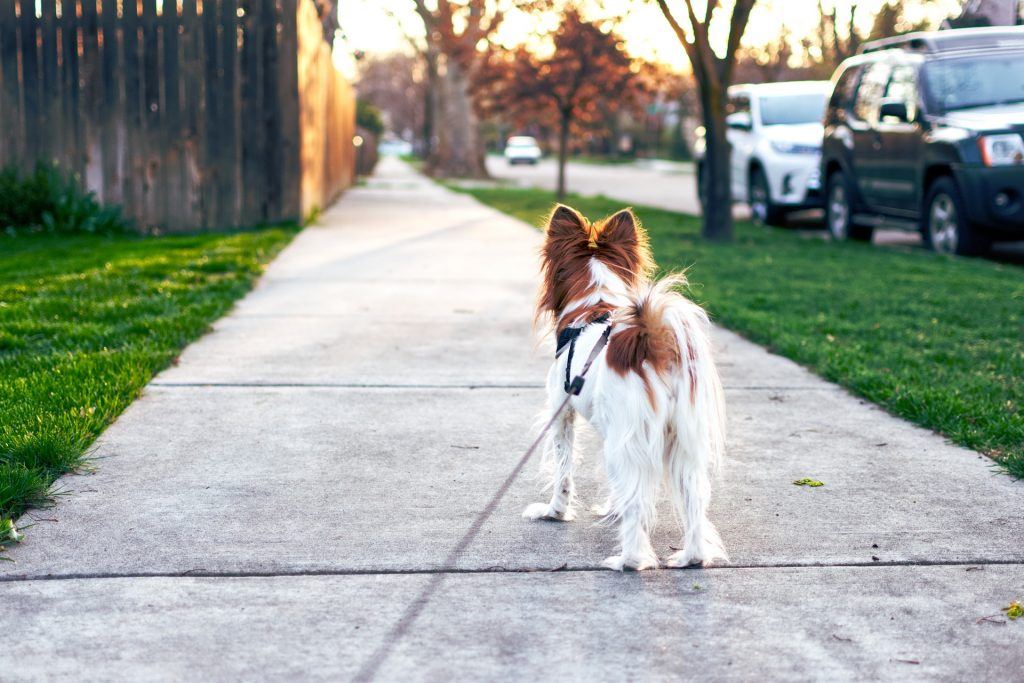 How Much Does Dog Walking Cost?
