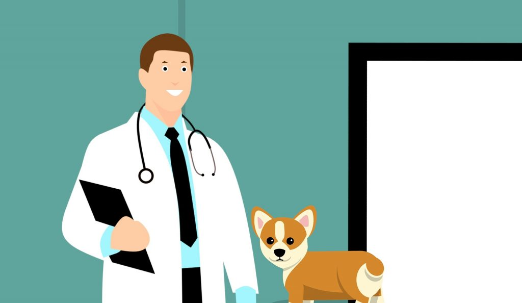 How Often Should I Take My Dog To The Vet?