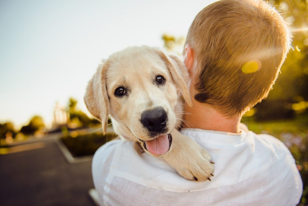 How To Get Your Dog To Like You