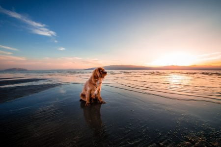 Dog Bladder Cancer What To Expect