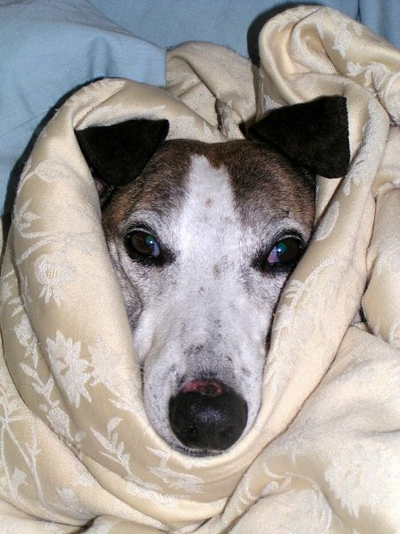How Long Can A Dog Go Without Eating When Sick